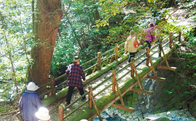 삼림 테라피 가이드 클럽