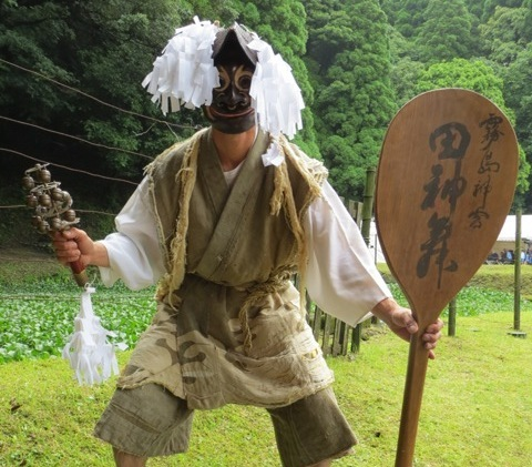 霧島神宮斎田御田植祭が斎行されました