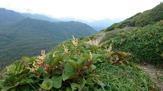 高千穂峰登山道視察を実施
