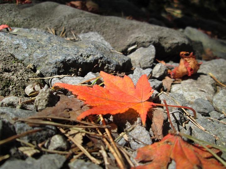 秋ですよ~!
