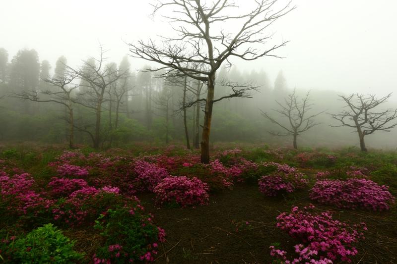再生する霧島