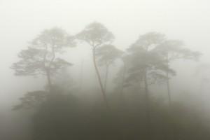 霧雨の霧島