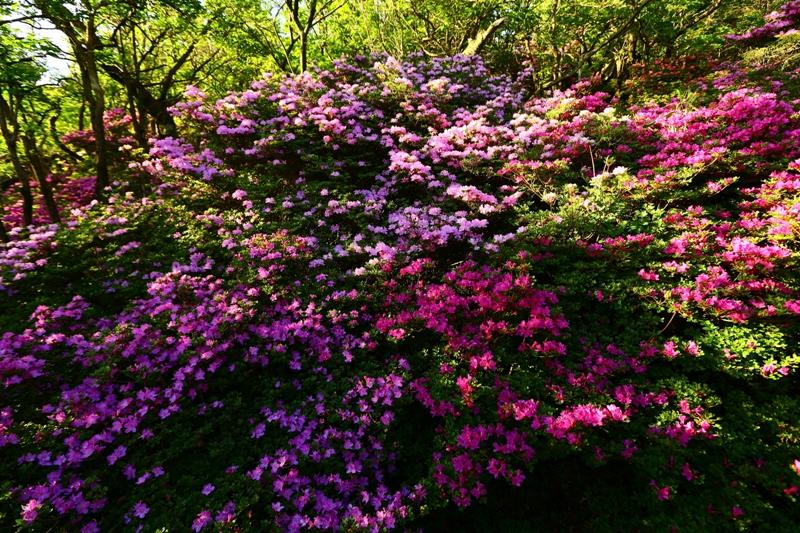 花と緑豊かな霧島