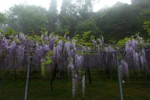 霧島春の香り2