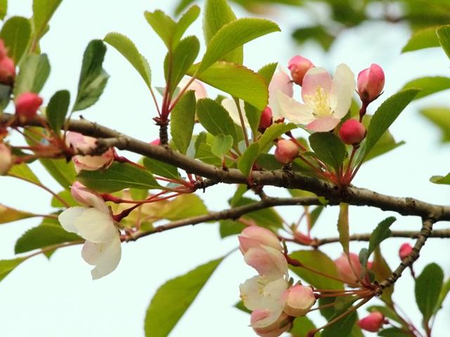 えびの高原の花々