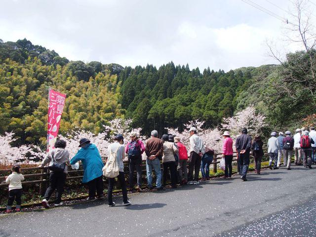 """日帰りバスツアー""""きりしまジオサイト巡りと桜お花見ツアー""""を開催しました"""