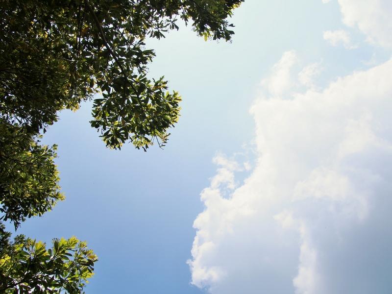 森林セラピー体験ウォーキングin柳ヶ平散策路に参加してきました☆