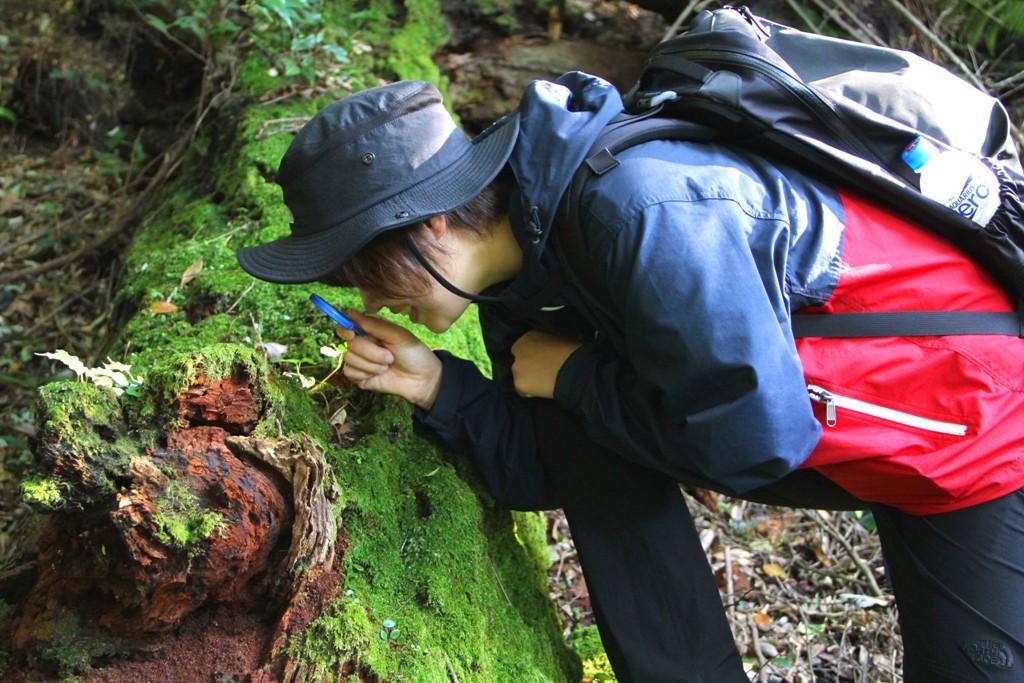 森林セラピーという、霧島のあそび方