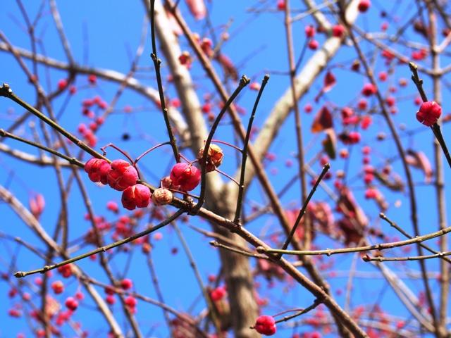 霧島 冬の木の実探し