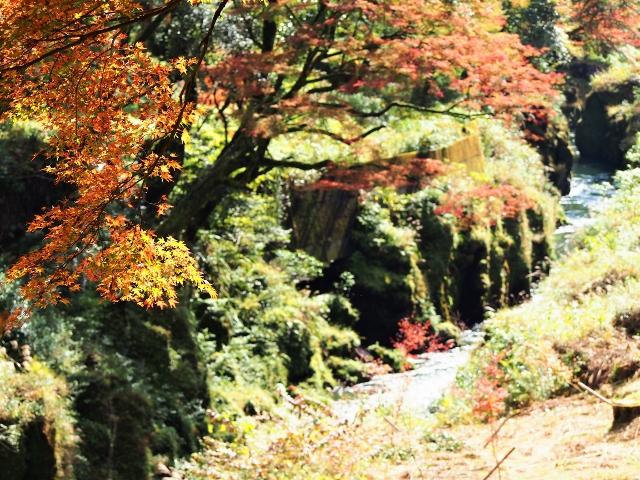 新川渓谷遊歩道の紅葉状況2015.11.8