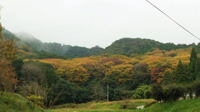 横川のけやきの森の紅葉状況2015.11.14