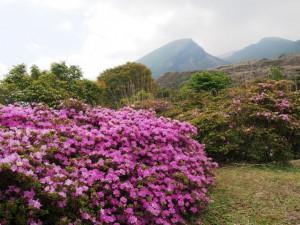 えびの高原池めぐり~花を訪ねて~