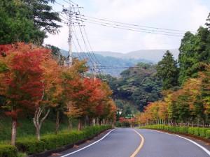 霧島温泉郷の紅葉の状況2014.10.25