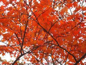 秋の色と出逢いと。。。