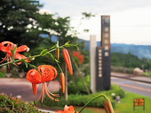 風とオニユリの花