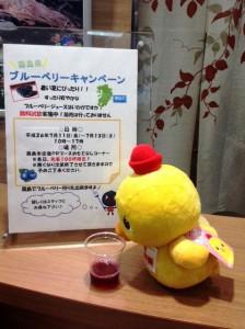 霧島産旬のブルーベリーキャンペーンスタート!