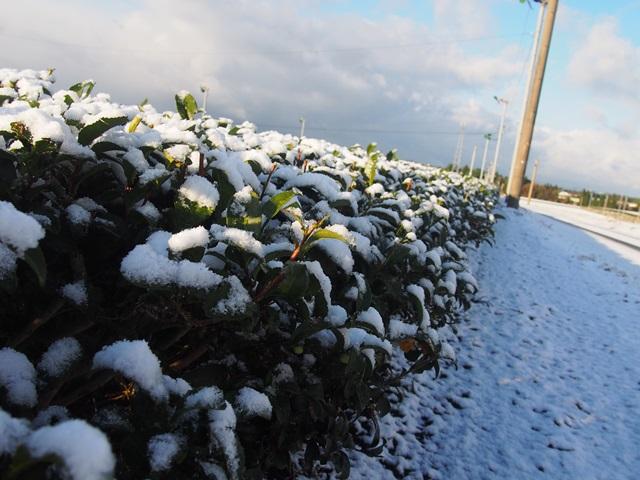 雪が降りました!