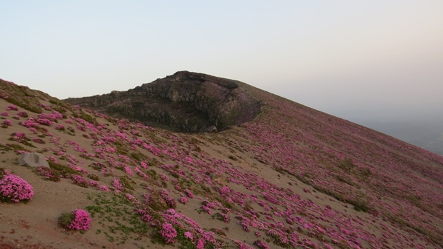 高千穂峰のミヤマキリシマツツジ2014.5.28
