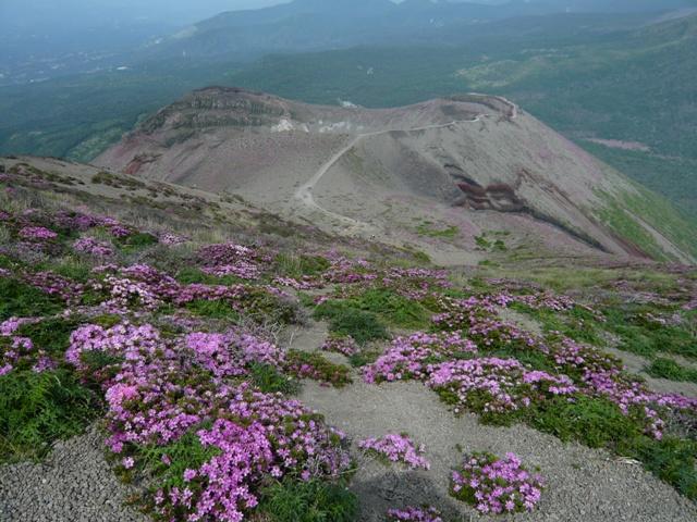 高千穂峰のミヤマキリシマツツジ開花状況2014.6.1