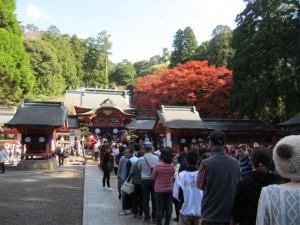 霧島神宮の紅葉も見頃を迎えています