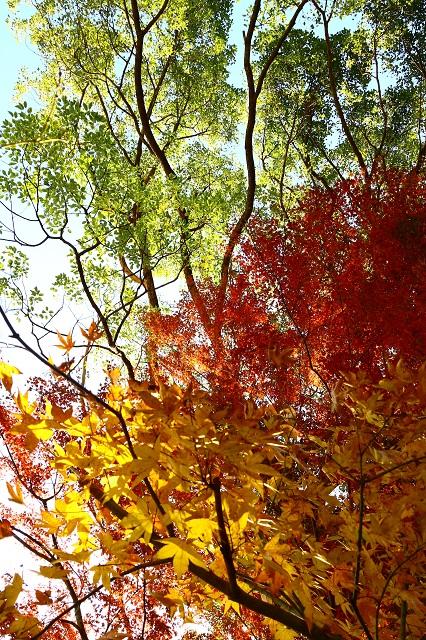 秋が魅せる色彩
