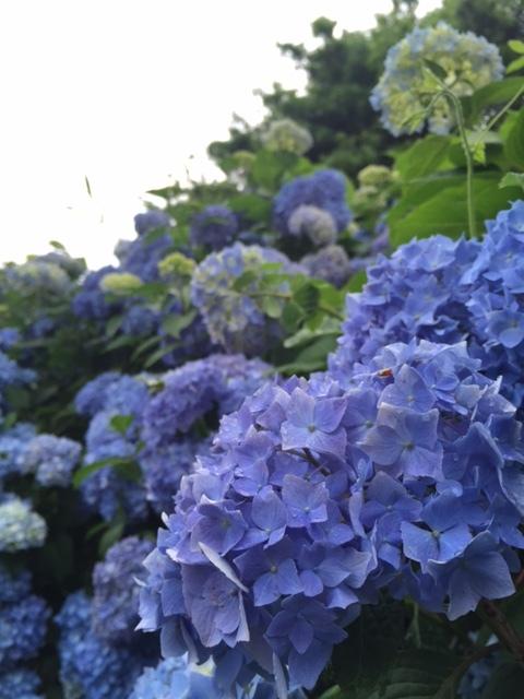 九州南部が梅雨入りしました。
