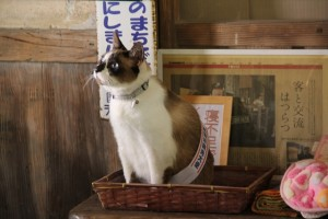 嘉例川観光大使任命式がありました♪
