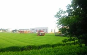 綺麗なみどりの茶畑を見ながら、、