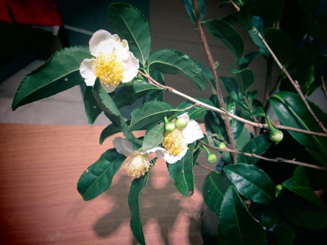 この花は、、