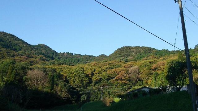 横川けやきの森の紅葉状況 2016.11.3