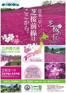 芝桜まつりが開催されています