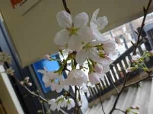 小さな春🌸