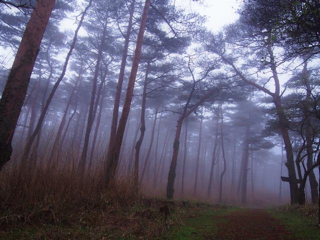 霧のえびの高原☆