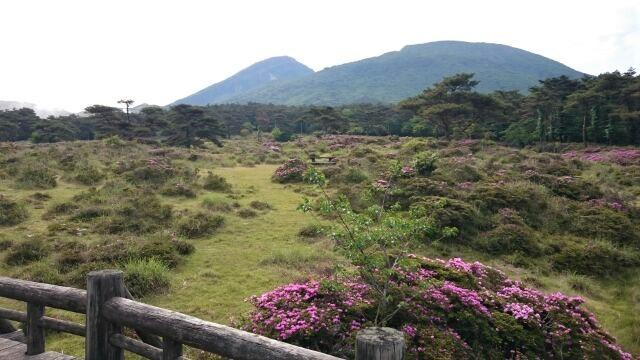 ミヤマキリシマの開花状況 2017.6.5撮影