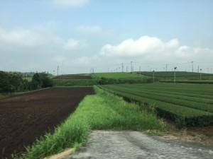 今日の茶畑