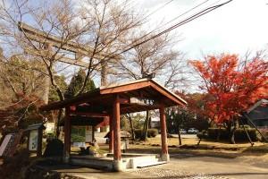霧島神宮周辺の紅葉が見頃を迎えました♪♪