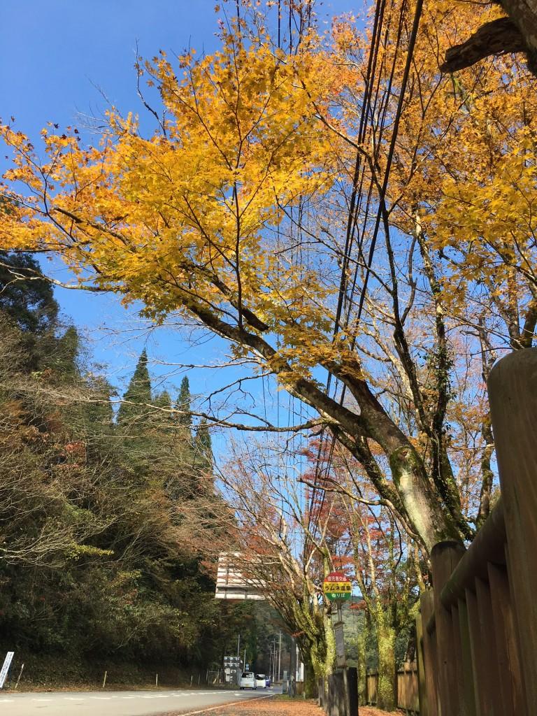 新川渓谷遊歩道の様子🍂