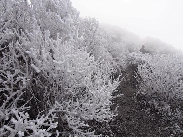 霧島連山の今季初霧氷☆