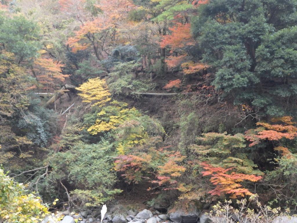 紅葉状況(県道104号線霧島公園小林線)2017.11.10