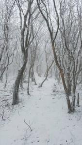 韓国岳の雪景色☆ 撮影2017.12.8