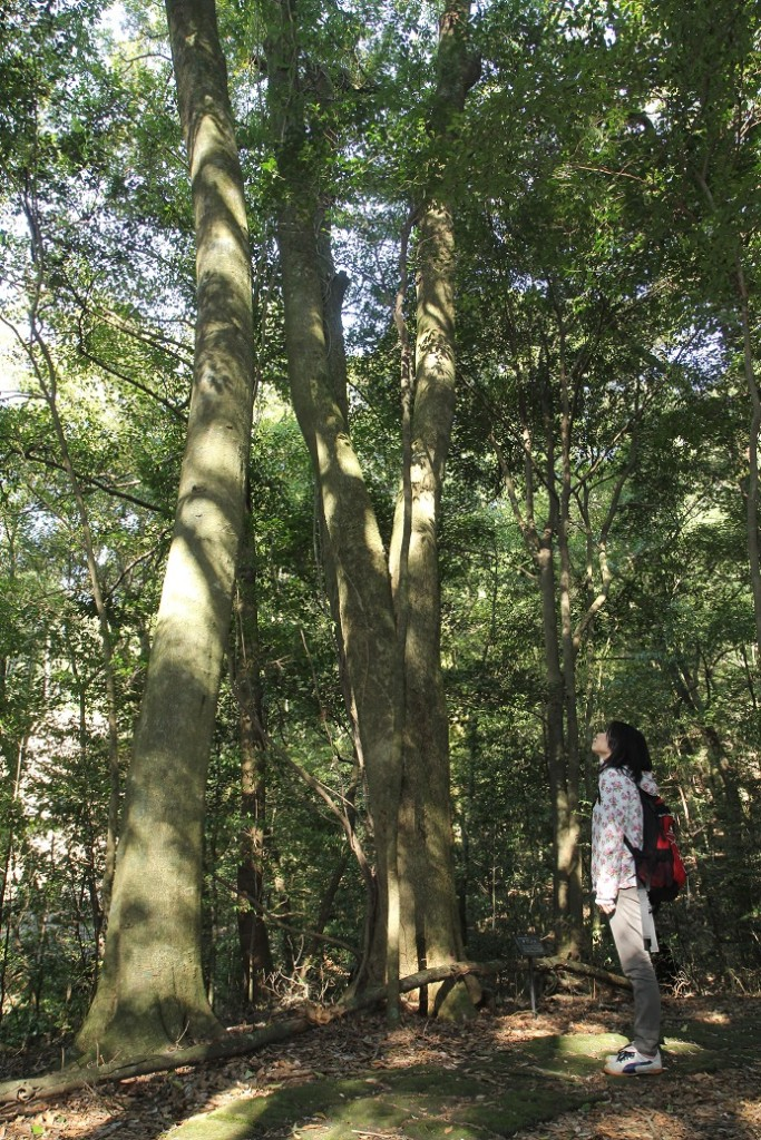 森林セラピー散策予定表です☆森に癒されに行きませんか?