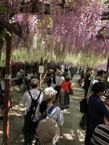藤まつり 開花セレモニー(from和気公園)