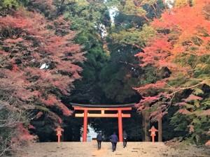 霧島神宮の紅葉情報 撮影2018,11,20