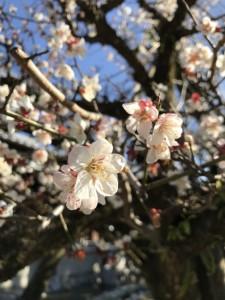 春のたより♪