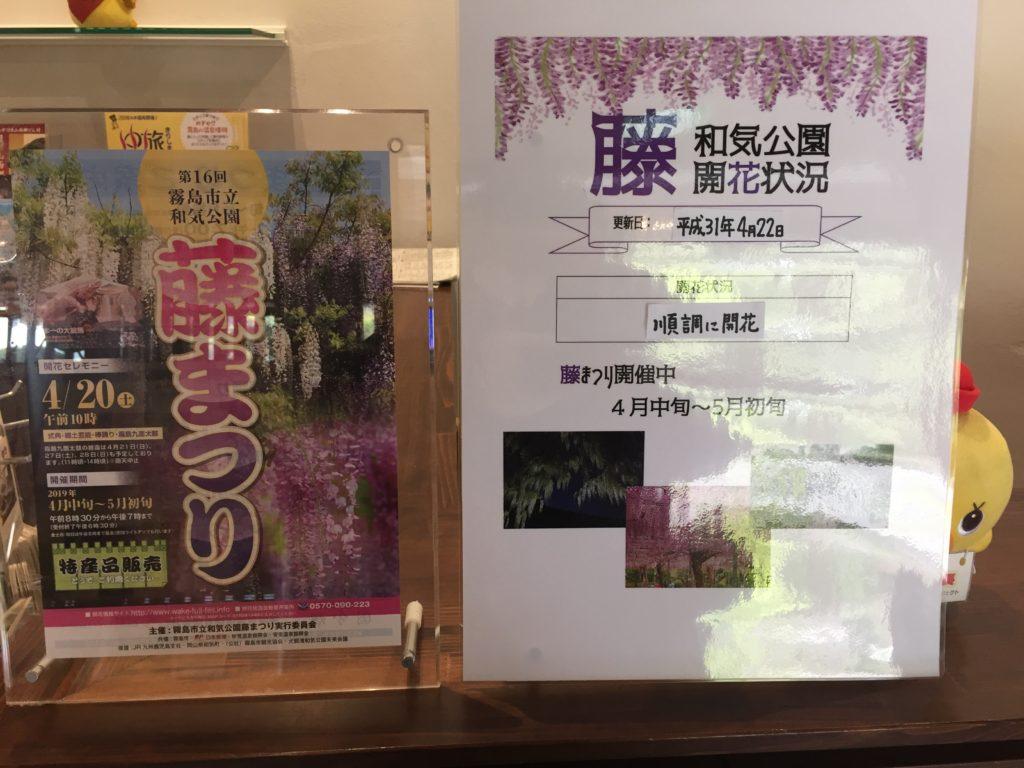 藤まつり開催中です(^O^)/ (4月30日より入場料が無料になっております。)