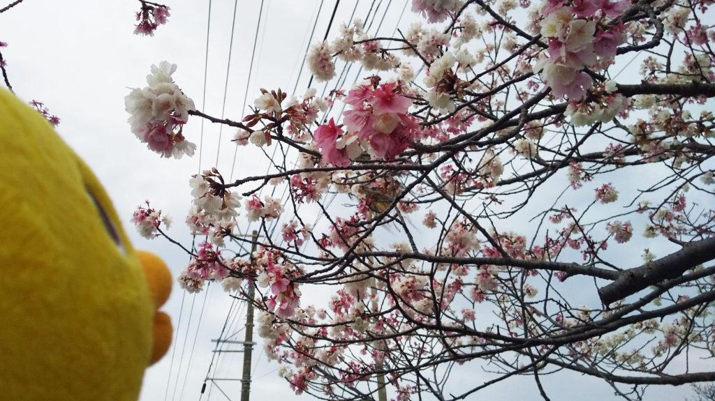 桜の花を発見🌸