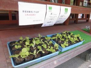 Kirishima Community Garden Projectの苗販売開始しました!