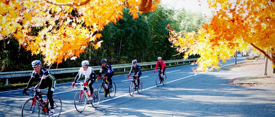 紅葉とサイクリング