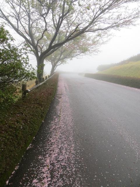 桜の集いが開催されました