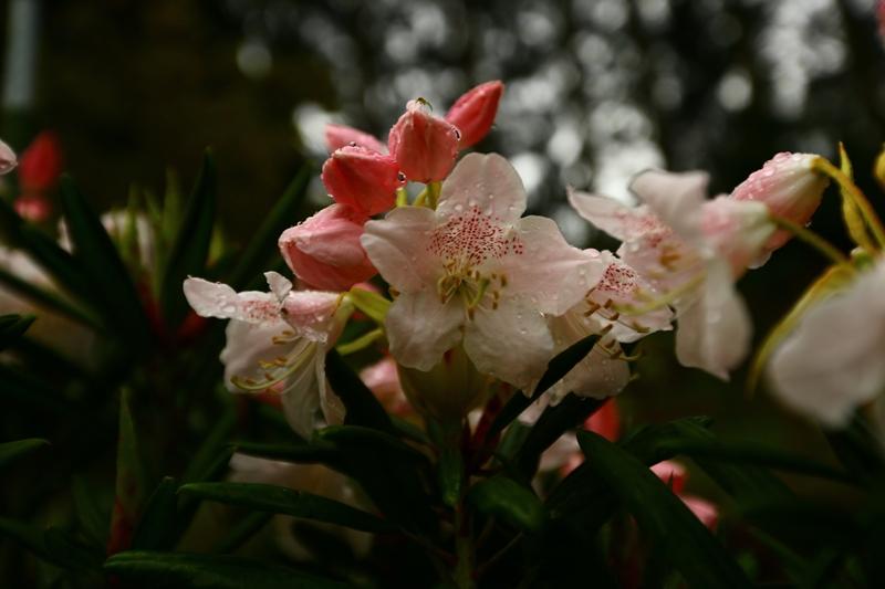 春色まっさかり